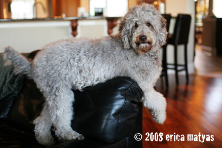 Rainmaker Ranch Labradoodle Fl Sc And Tn