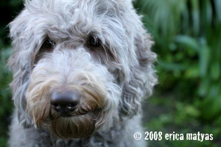 Celebrity dog breeder the game