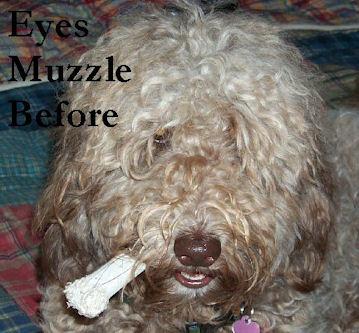 Labradoodle Ear grooming